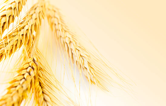 Hrana poznatog podrijetla koju proizvode educirani proizvođači.